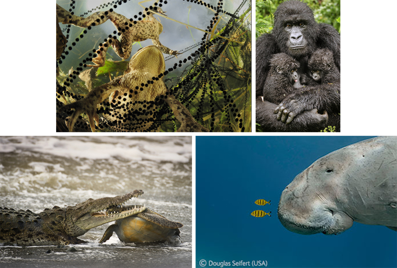 Wildlife photographer of the year exhibition-