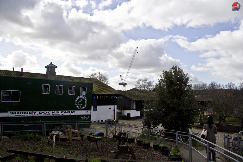 Farm - London - Surrey Docks